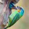 Birds – 1 puzzle