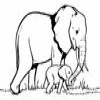 Coloring Elephants -2
