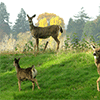 Family of Deer Jigsaw Puzzle