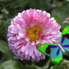 Kingdom of the flowers