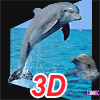 3D Real Puzzle Dolphin