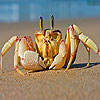 Alone crab at the beach puzzle