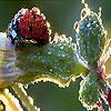 Alone ladybug slide puzzle