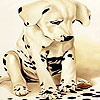 Alone spotted dog slide puzzle