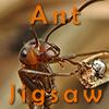 Ant Jigsaw