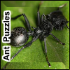 Ant Puzzles