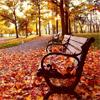 Autumn Park Jigsaw