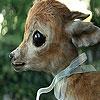 Baby deer coloring