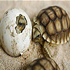 Baby turtles slide puzzle