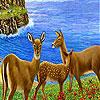 Beautiful gazelles slide puzzle