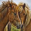 Best horses puzzle
