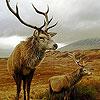 Big deers puzzle