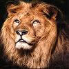 Big lion king slide puzzle
