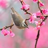 Bird at Spring