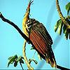 Bird on the tree slide puzzle