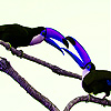 Blue billed polly slide puzzle