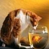 Cat & Fish Sliding