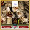 Cat Sliding Puzzle