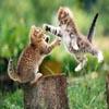 Cats Fight Jigsaw