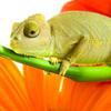 Chameleon Slider Puzzle