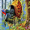 Colorful turkey in the forest puzzle