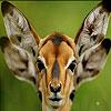 Confused deer puzzle