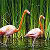 Couple flamingo slide puzzle