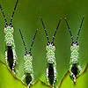 Crazy grasshoppers slide puzzle