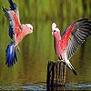 Crazy red birds slide puzzle
