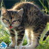 Cute And Lovely Cat Jigsaw Puzzle