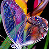 Cute colorful butterfly puzzle