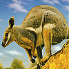 Cute kangaroo slide puzzle