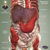Digestive Jigsaw