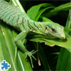 Emerald Tree Monitor Jigsaw