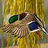 Flying bird slide puzzle