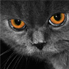 Gray Cat Jigsaw