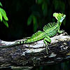Green  lizard slide puzzle