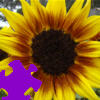 Harvest Sunflower Jigsaw