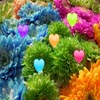 Hidden Hearts