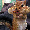 Hungry cute squirrel slide puzzle