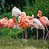 Hungry flamingos slide puzzle