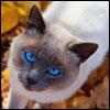 Jigsaw Autumn Cat