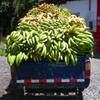 Jigsaw: Banana Truck