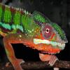 Jigsaw: Chameleon