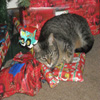 Jigsaw: Christmas Cat