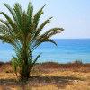 Jigsaw: Palm Tree