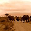 Jigsaw: Elephants