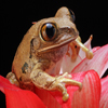 Jigsaw: Flower Frog