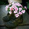 Jigsaw: Flower Shoes