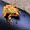 Jigsaw: Frog on Seat